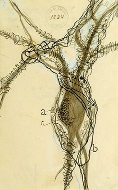 recalculate-restate-reverberate:    A 1914 depiction of a neuron cell body by a scientist that personally inspires me, Santiago Ramón y Cajal. The image appears in Portraits of the Mind, a new book on the history of neuro-imaging represented by the images, and the Smithsonian magazine feature Beauty of the Brain.