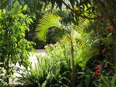 Casa de la Vida garden. Come smell the aroma of some of our lemon trees, or pick some greens for your salad. We have something beautiful in every corner, and exotic blossoms that will surprise you!