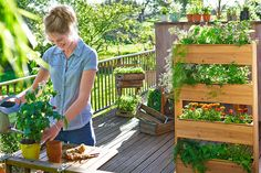 Odkryj to właśnie w Tchibo. Herb Garden, Home And Garden, Vertical Gardens, Outdoor Furniture, Outdoor Decor, Garden Bridge, Balcony, Deck, Backyard