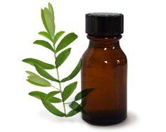 10 façons d'utiliser l'huile de théier (tea tree) en beauté, santé et pour l'usage domestique.