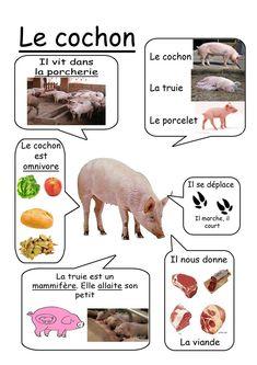"""Résultat de recherche d'images pour """"animaux ferme video documentaire maternelle"""""""