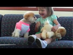 Boo - The World's Cutest Donor This makes me want to die! of cuteness! Boo looks like a real life stuffed animal! Cute Names For Dogs, Dog Names, Cute Dogs, Boo And Buddy, World Cutest Dog, Puppy Love, Real Life, Puppies, Watch