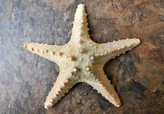 Thorny Starfish 6-7