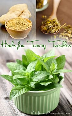 Herbs for Common Stomach Problems Series, Part 1 | deliciousobsessions.com #digestion #herbs #homeremedy