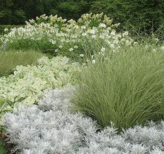 White and silver light up an evening garden - you could line the lawn with white and silver plants and flowers, then plant colorful flowers behind.