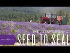 Young Living's Seed to Seal - YouTube