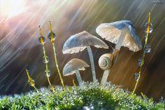 Micro bosco - Una combinazione di sole e pioggia che crea piacevoli contrasti di luce e colori dando vita a una composizione autunnale.