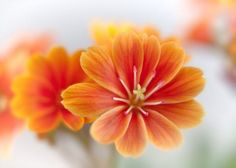 30+ Types of Orange and Yellow Flowers, HD IMAGES - Beautiful Flowers | Jessica Paster