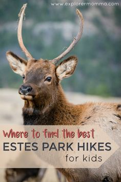 Are you ready for an amazing Estes Park, Colorado Rocky Mountain adventure? Plan for the kids to get out and love nature with these top Estes Park hikes with kids. #estespark #hikesforkids