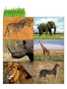 Animal Biomes Animal Activities For Kids, Nursery Activities, Animal Crafts For Kids, Animal Projects, Infant Activities, Animals For Kids, Animal Worksheets, Animal Antics, African Animals