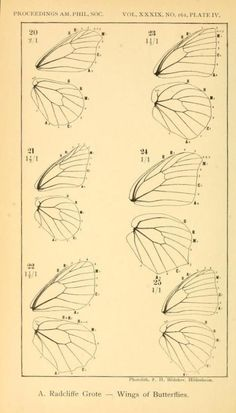 Doodle Drawing, Drawing Tips, Drawing Reference, Painting & Drawing, Butterfly Drawing, Butterfly Wings, Drawings Of Butterflies, Fairy Wings Drawing, Insect Art