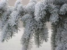 Quando ghiaccio e neve creano opere d'arte