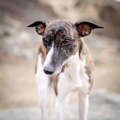 Dogs, Animals, Instagram, Youtube, Animales, Animaux, Pet Dogs, Doggies, Animal