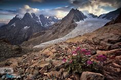 Flowered Vallouise - Pinned by Mak Khalaf From left to right: MT Pelvoux Pic Sans Nom Ailefroide and Barre des Ecreins with white Glacier. Landscapes AilefroideBarreBlancEcreinsFranceGlacierGletscherNoirParc NationalPelvouxVallouisebeautifulbluecloudsflowergreenlightskysummersunsunsetwhite by vivaldafabio