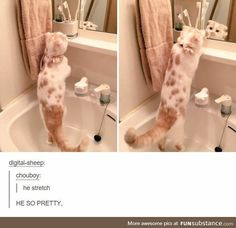 Funny Animal Memes, Cute Funny Animals, Cute Baby Animals, Cat Memes, Funny Cute, Animals And Pets, Cute Kittens, Cats And Kittens, I Love Cats