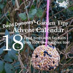 David Domoney's Garden Tips Advent Calendar Day 18