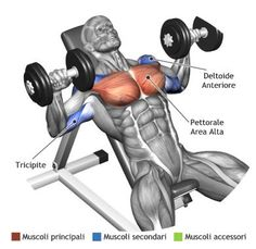 Chest Workouts More