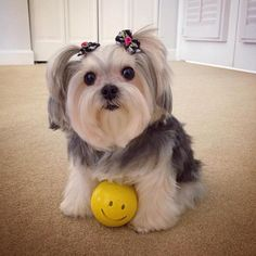 BarkFeed: Submit and vote on the best doggie pics and videos!