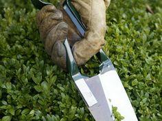 Snoeikalender: wat snoei je in welke maand | vtwonen Parks, Fendi, Gardening, Quiche, Fingers, Cactus, Calendar, Lawn And Garden, Quiches