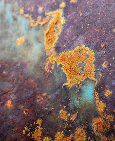 Lichen on Rust, bathtub room floor: movement and pattern. ( the colours are beautiful, but not our palette) Textures Patterns, Color Patterns, Art Grunge, Peeling Paint, Rusty Metal, Texture Art, Color Inspiration, Artwork, Abstract Art