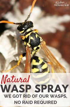 You don't need Raid or yucky chemicals to kill a wasp nest or bees. Get rid of wasps without chemicals with this super simple natural wasp killer spray recipe.
