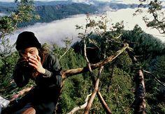 Ela viveu 738 dias em cima de uma árvore para impedir que a cortassem