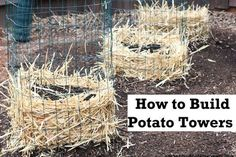How to build a potato tower. Note this: put a piece of PVC pipe with holes drilled in it down the middle of the tower, should make watering easier.