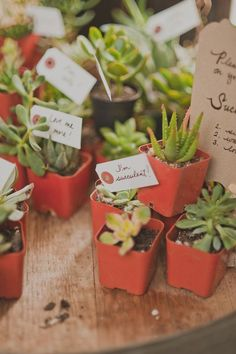 succulent wedding favors // photo by Dove + Sparrow // View more: http://ruffledblog.com/brooklyn-winery-wedding/