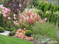 Zielonej ogrodniczki marzenie o zielonym ogrodzie - strona 1101 - Forum…