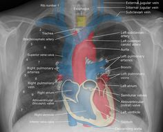 More great news on how vaping affects the heart http://vaping411.com/myocardial-function/