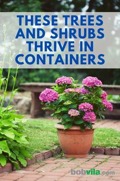 These trees and shrubs don't mind the tight constraints of a container. See the best plants for a container garden that you can keep indoors or outside. | These Trees and Shrubs Thrive in Containers Container Flowers, Container Plants, Container Gardening, Gardening Tips, Garden Ideas Budget Backyard, Easy Garden, Garden Bed, Patio Ideas, Layout Design