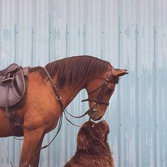 Mãe documenta a amizade do filho com seus dois cães gigantes e um cavalo de estimação