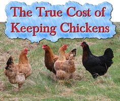 The True Cost of Keeping Chickens