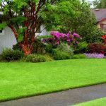 Check out lawn care tips for emerald green grass, even faster lawn mowing and simpler lawn fertilizing. Porches, Green Lawn, Green Grass, Eco Green, Green Garden, Outdoor Landscaping, Outdoor Gardens, Landscaping Ideas, Growing Grass