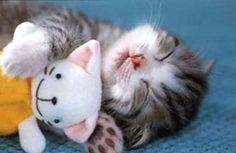Фото: Милейшие животные, которые больше всего на свете любят спать