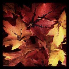 Fall Assembly