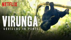 """Check out """"Virunga: Gorillas in Peril"""" on Netflix"""