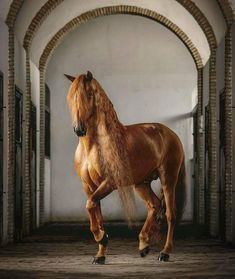 Gotan - an amazing Lusitano stallion owned and trained by Clemence Faivre. This horse is a real artist! Photographed in beautiful old stables in heart of Andalusia, Spain. Horses And Dogs, Cute Horses, Horse Love, Wild Horses, Animals And Pets, Cute Animals, All The Pretty Horses, Beautiful Horses, Animals Beautiful