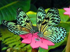 beautiful butterflies pictures   Beautiful Butterfly's by ~Wiseyyyyyyy on deviantART