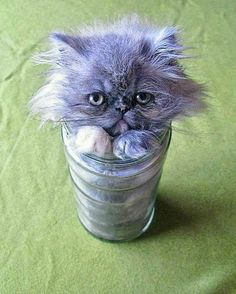 20 Photos That Prove Cats Turn Into Liquid When Comfortable - World's largest collection of cat memes and other animals Cute Kittens, Pics Of Cute Cats, I Love Cats, Cats And Kittens, Cats Meowing, Siamese Cats, Baby Animals, Funny Animals, Cute Animals