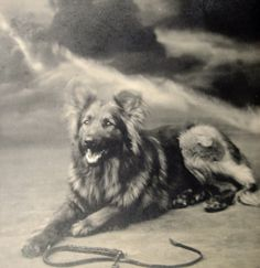 Antique dog rppc 1910s by DogDayAfternoons on Etsy, $7.00