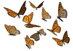 Monarch Butterfly Clipart PNG by madetobeunique.deviantart.com on @deviantART