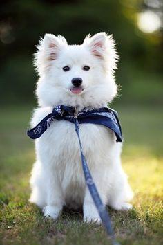 Prácticamente no existe otra especie de animal en el mundo que tenga la diversidad de razas como el perro.
