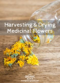 Using flowers for medicinal purposes is a fun way to bring the natural world into our medicine cabinets. Flowers like echinacea, calendula, nasturtium, lavender, red clover, chamomile, and yarrow a... Healing Herbs, Medicinal Plants, Natural Healing, Natural Oil, Natural Beauty, Natural Home Remedies, Herbal Remedies, Health Remedies, Natural Medicine