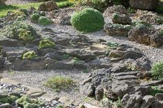 Google Image Result for http://www.alpinegardensociety.net/image_files/diary/sizedBland%2520Rock%2520Garden13160.JPG