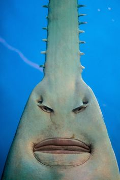 Hi there... I'm Norman... I'm a swordfish, which means I can slice and dice you if I wanted... but that's not what I'm all about... I was just wondering if I could talk to you about my Lord and Savior... No... well, I've got some pamphlets here if you would... No... well... ok, then... maybe, I should have stuck with slicing & dicing... how about that, then...?