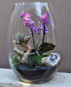 Orchids - Check out the 10 most beautiful flowers to grow! Orchids - Check out the 10 most beautiful flowers to grow! Orchids - Check out Orchid Terrarium, Air Plant Terrarium, Garden Terrarium, Terrarium Ideas, Orchid Plants, Air Plants, Orchids, Succulent Gardening, Succulents Garden