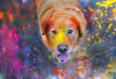 Love this picture! Dog photography with a golden retriever! Tier Wallpaper, Animal Wallpaper, Wallpaper Desktop, Windows Wallpaper, Desktop Backgrounds, Colorful Wallpaper, Nature Wallpaper, Iphone Wallpapers, Pattern Wallpaper