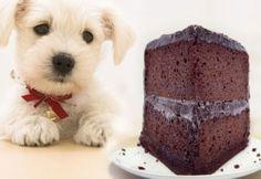 10 alimentos que pueden matar a tu mascota | Santiagonline