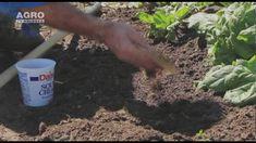 Make It Yourself, Garden, Youtube, Agriculture, Plant, Garten, Lawn And Garden, Gardens, Gardening